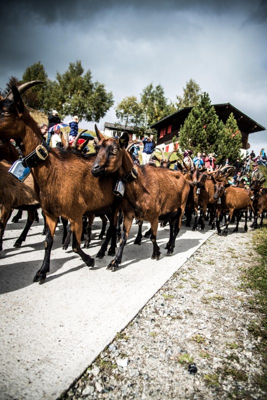 Alpabzug Day0105 - 20151003