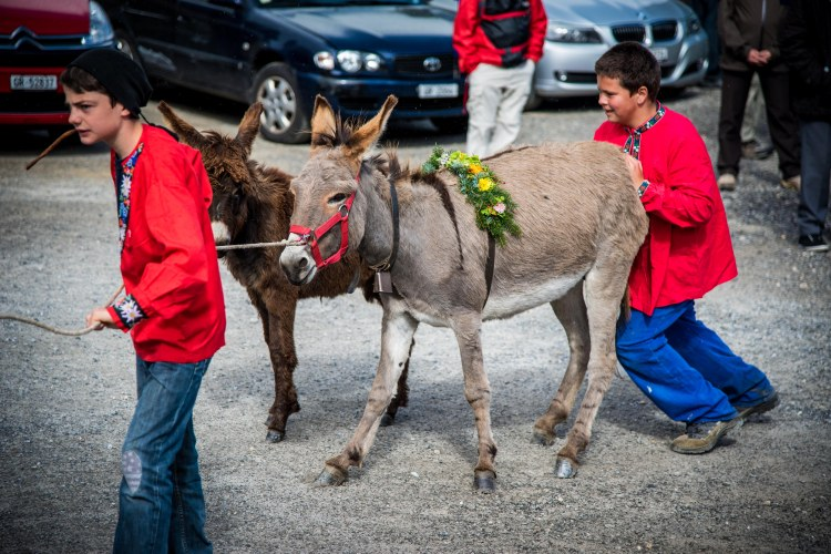 Alpabzug Day0123 - 20151003
