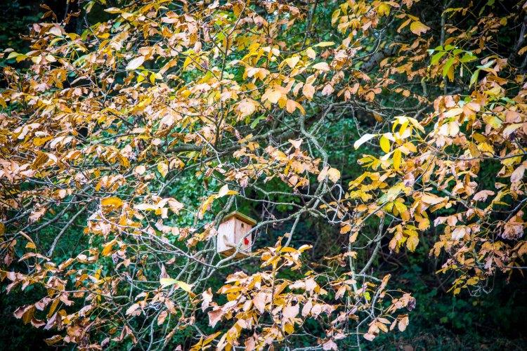 Fall in Rotkreuz 0034 - 20151011