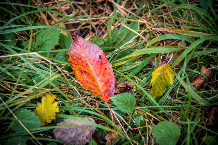 Fall in Rotkreuz 0141 - 20151011