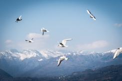 Lago Maggiore 0158 - 20160313
