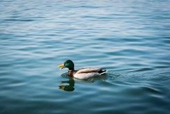 Lago Maggiore 0180 - 20160313