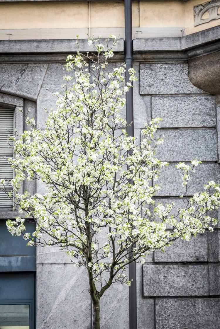 Spring @ Tribschen 0075 - 20160410