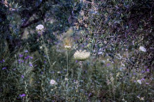Crete, Greece-015