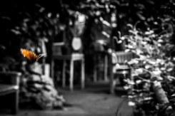Papilion-024