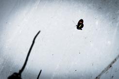Papilion-044