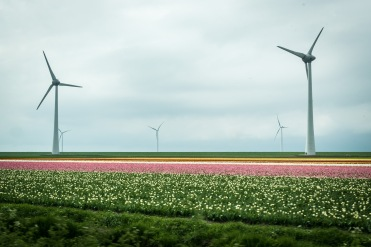 Friesland-169