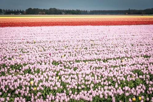 Friesland-183