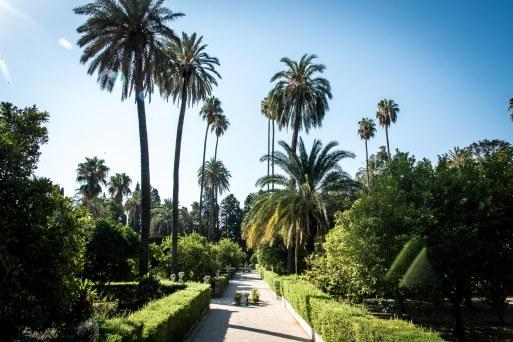 Spanish Sojourn - Seville-1010