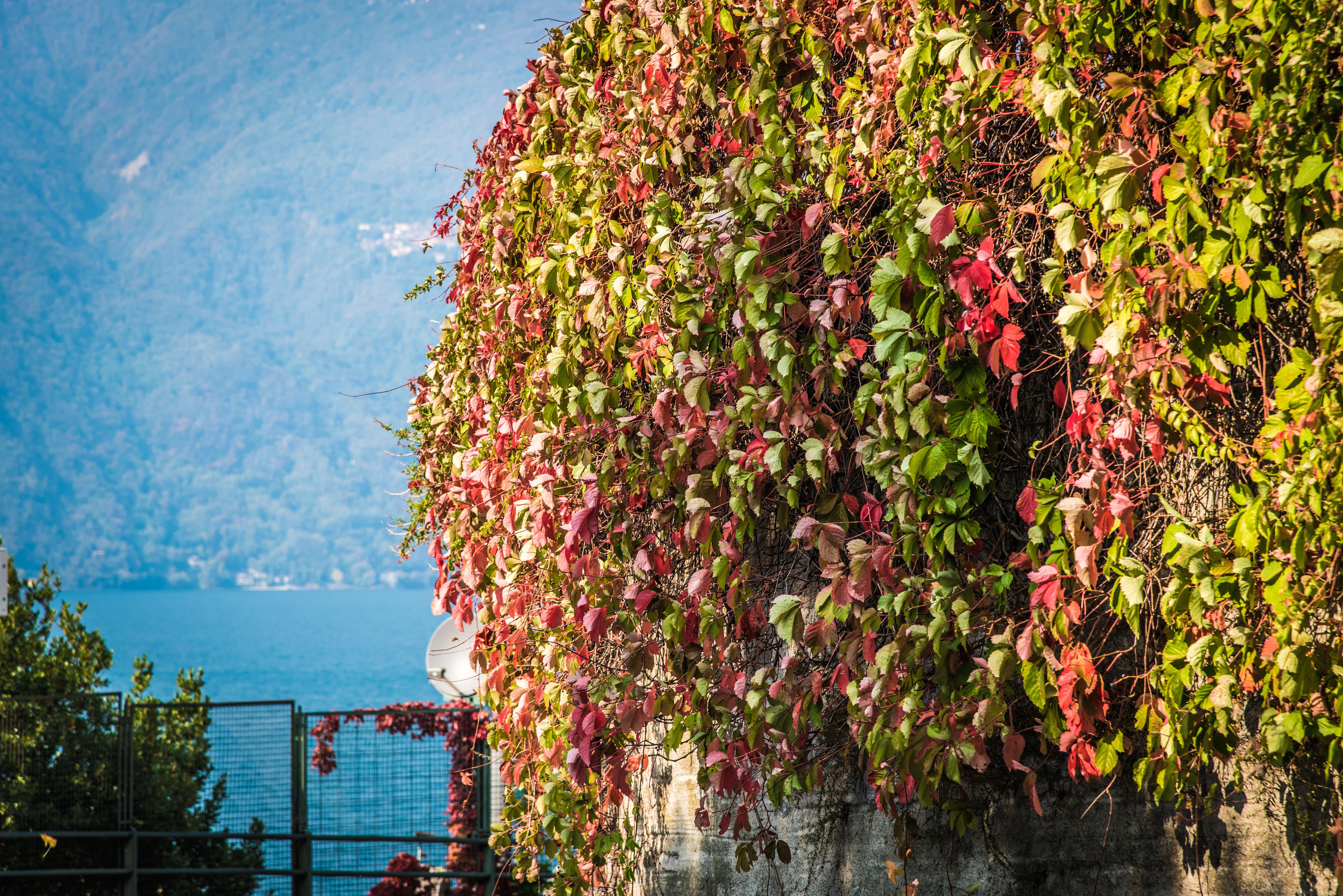 Soph & Jake Visit -Lake Como-070